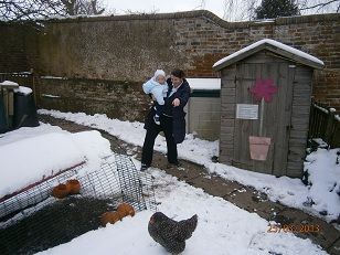 Holmsdale Manor Nursery Ibstock Chickens in the snow